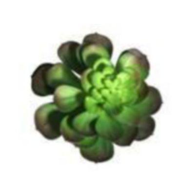 Tallo-Cactus-18-Cm