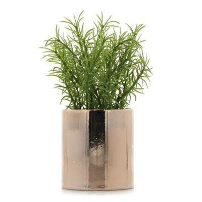 Planta-C-Pote-Surt-3Pz--14Cm