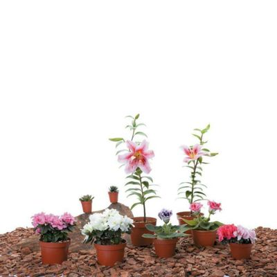 Planta-Tropical-Mp3
