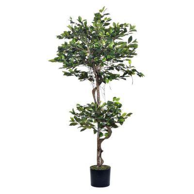 Planta-C--Pote-150Cm