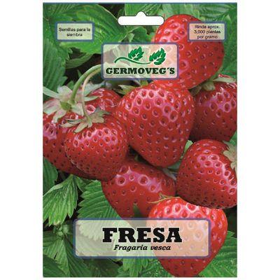 Semilla-De-Fresa---Garden
