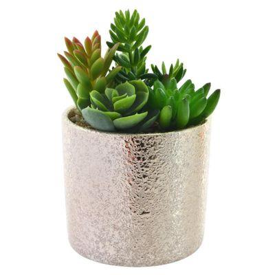 Planta-Con-Pote-9X9X16Cm---Concepts