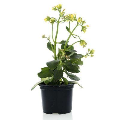 Planta-Tropical-Mp4
