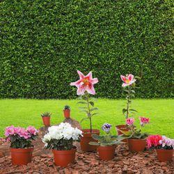 Plantas-Vivas-Colores-Surtidos